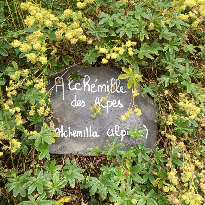1608_vacances_chamonix_montenvers_4