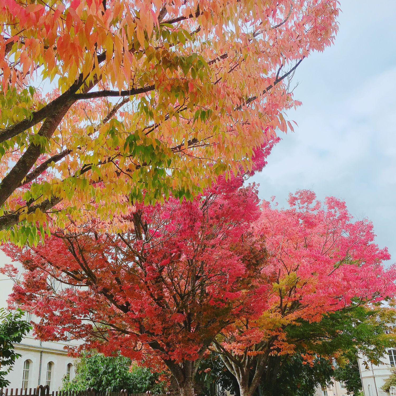 1610_automne_arbres_lycee