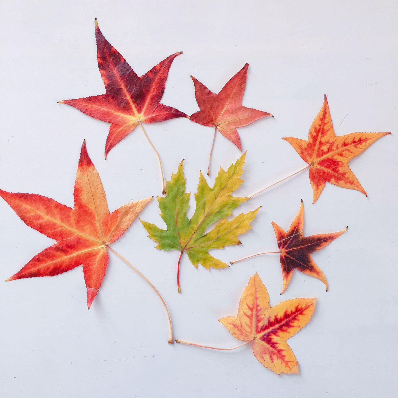 1610_automne_feuilles_herbier