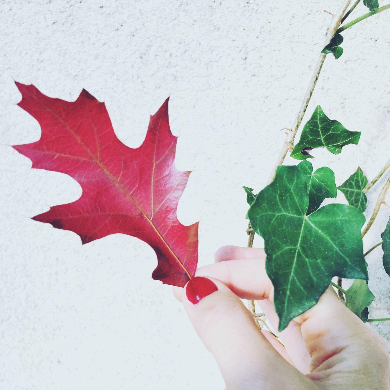 1610_automne_feuillerouge_main
