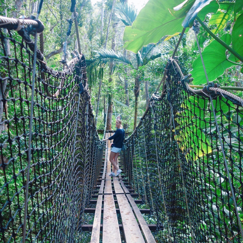 guadeloupe - zoo des mamelles- passerelle