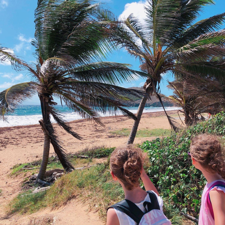 guadeloupe - les saintes - plage de Grande Anse