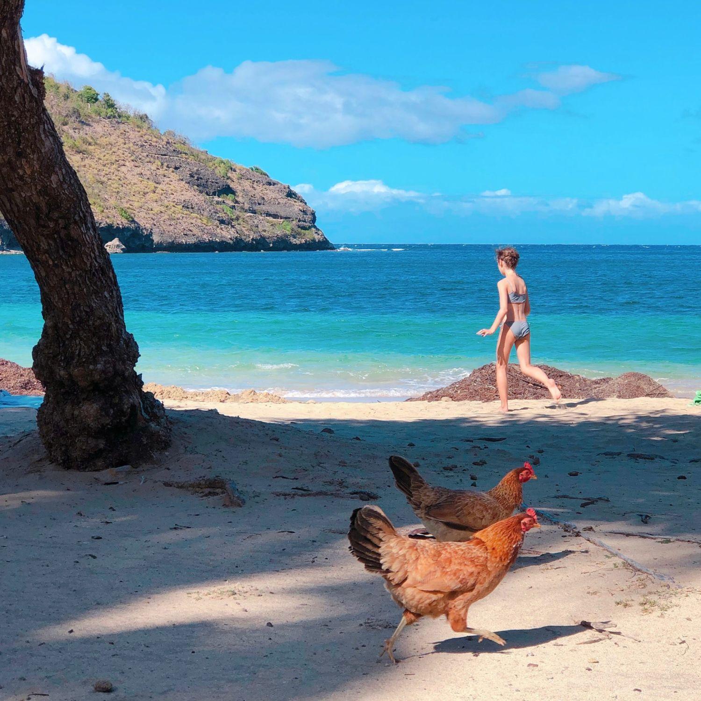 guadeloupe - les saintes - baie de Pompierre - plage et poules
