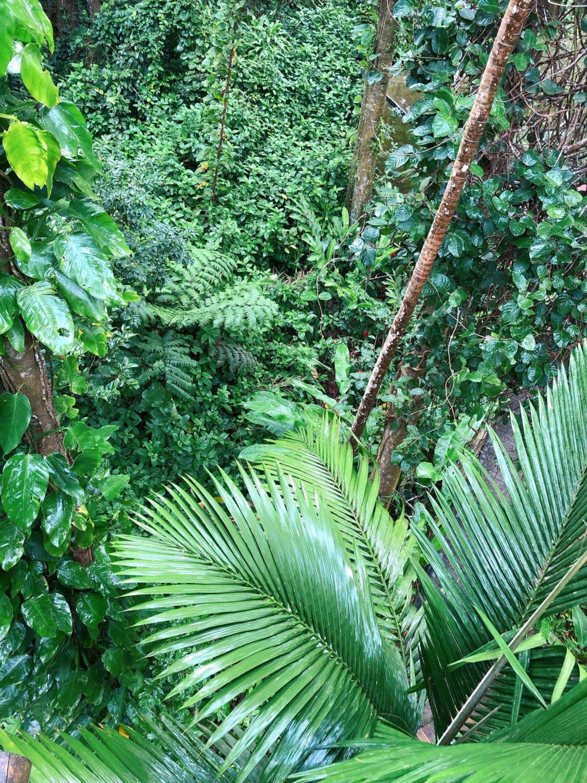 guadeloupe - zoo des mamelles - végétation tropicale
