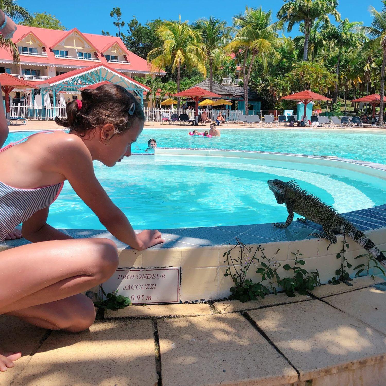pierre et vacances guadeloupe- piscine - iguane